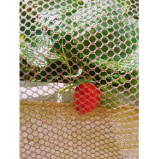 Strawberries Net